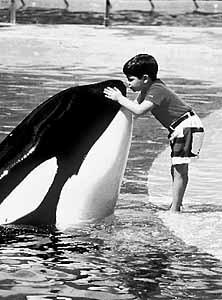 [photo] Comparaisons  impressionnantes orques / humains - Page 3 Keiko-child