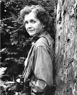 rachel louise carson Symbole de la résistance écologiste aux industries polluantes, cette scientifique américaine, née il y a 107 ans, est aujourd'hui honorée par google.